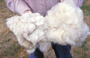 Продажа овечьей шерсти