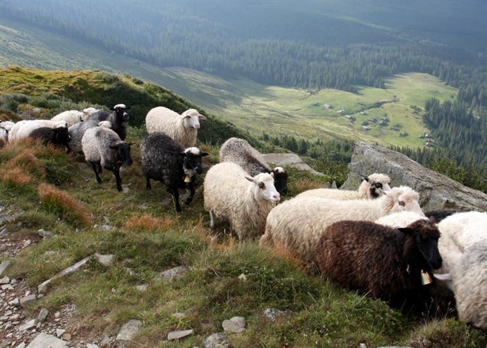 скачать овцеводство игру - фото 7